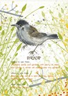 Blackcap Postcard by Michelle Campbell art print