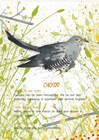 Cuckoo Postcard by Michelle Campbell art print