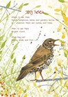Song Thrush Postcard by Michelle Campbell art print