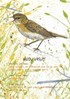 Willow Warbler Postcard by Michelle Campbell art print